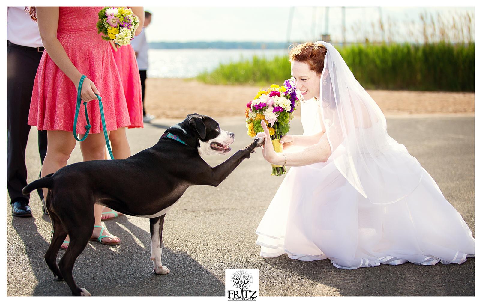 Radio doggy wedding